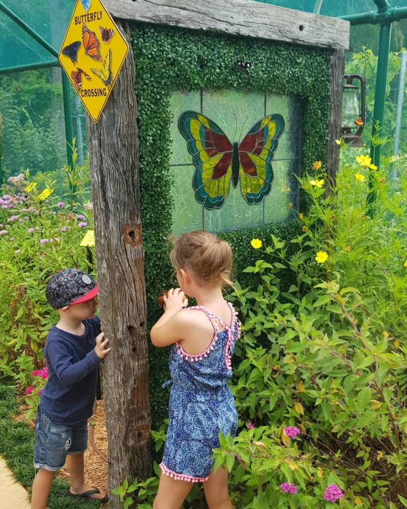 Bribie Island Butterfly House Visit Moreton bay Region Family Fun credit kids nature adventure