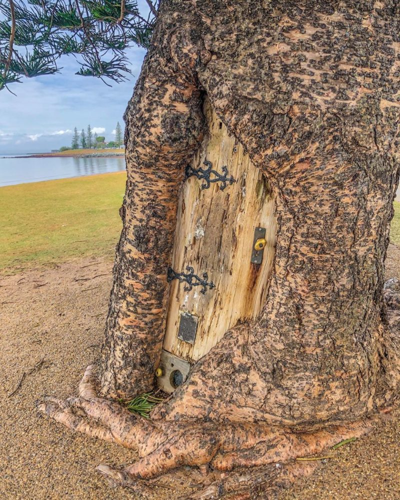 Gollum Tree Scarborough Magic Places Moreton Bay Region Credit kerry lee