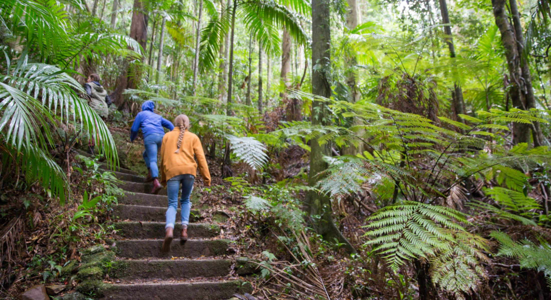 Mt Glorious Hike Visit Moreton Bay Region School Holiday Free Activity