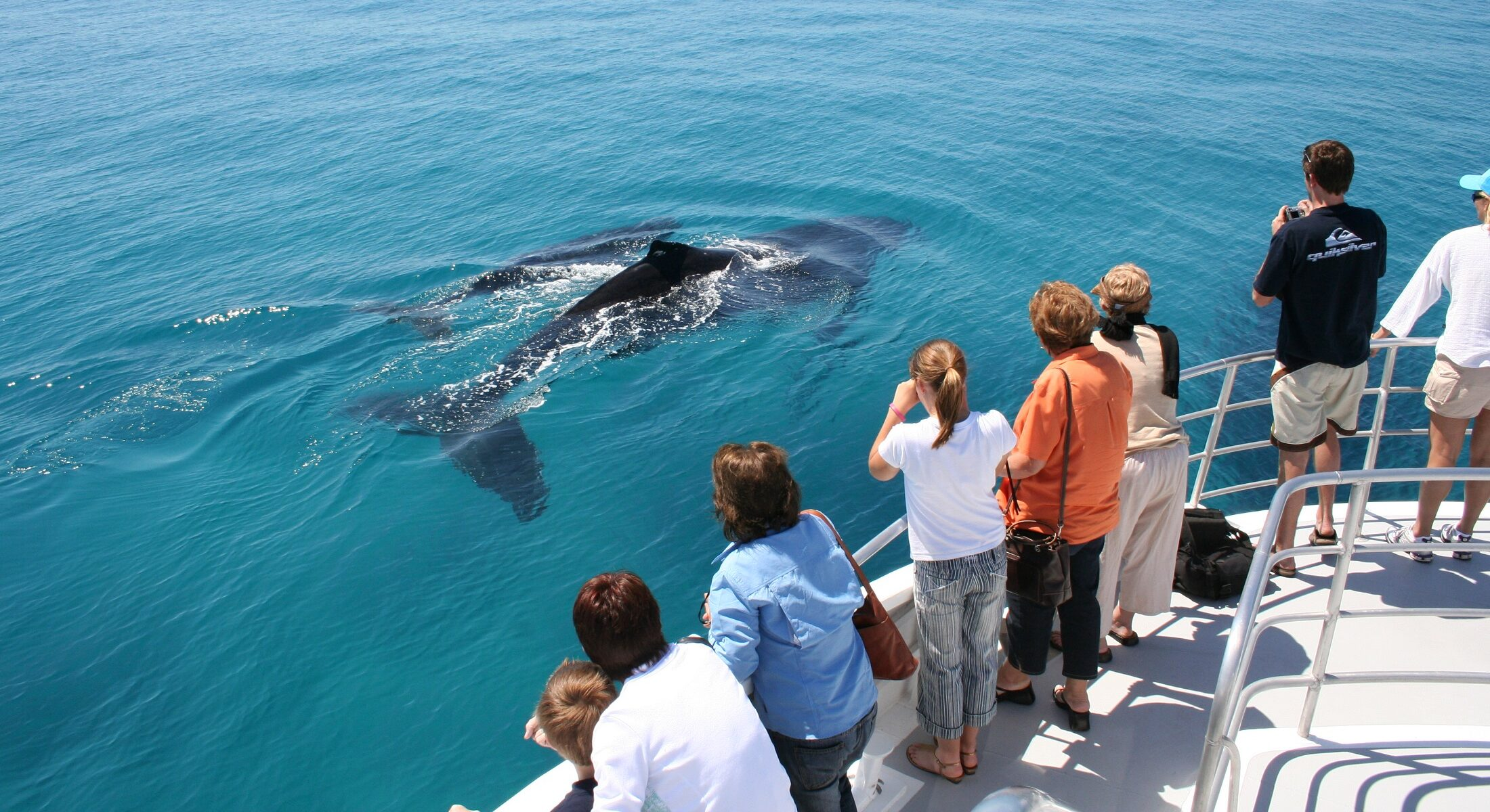 Brisbane Whale Watching Close Humpback Whale Encounters Moreton Bay